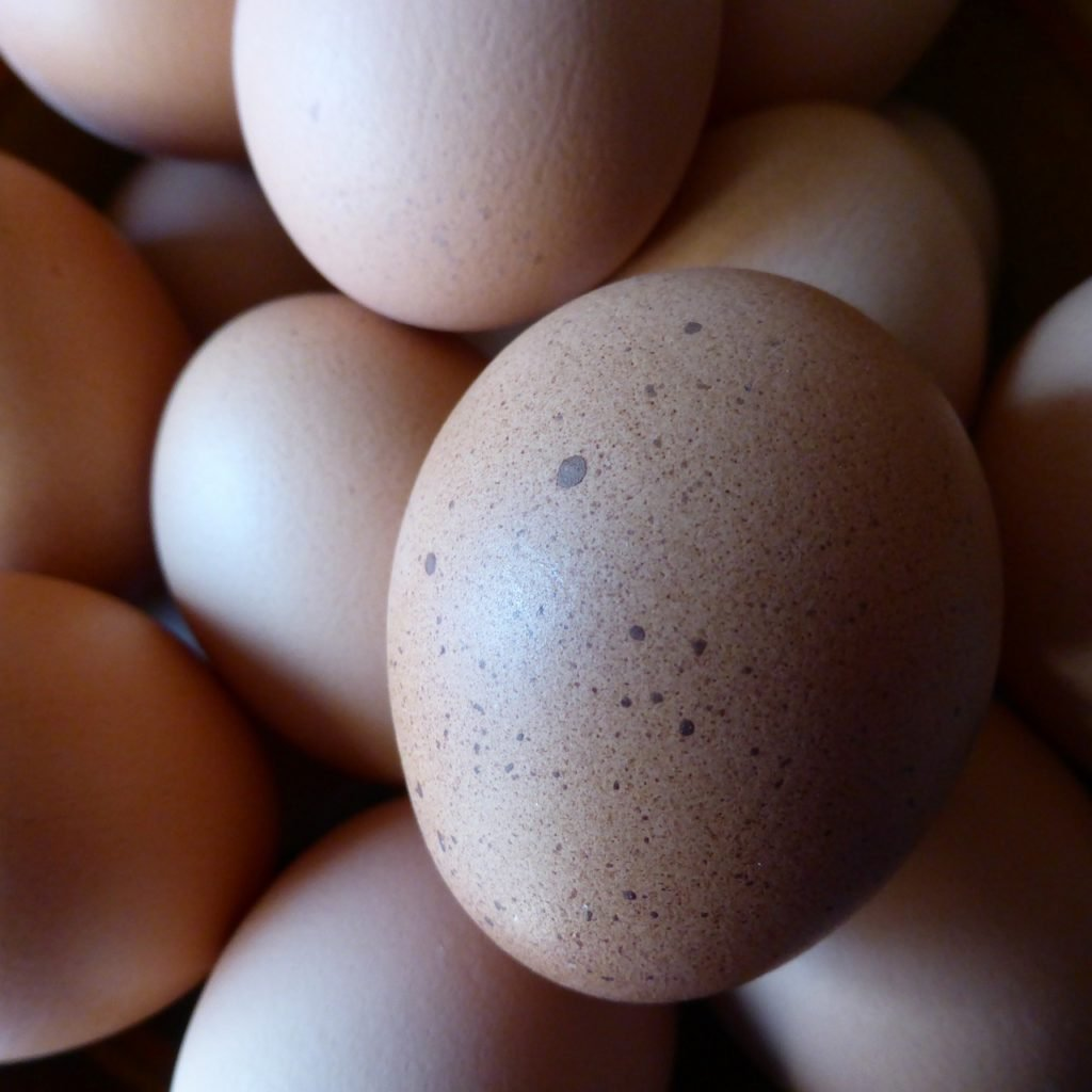 brown eggs close up